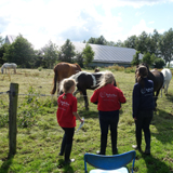 Workshop Paard Observeren